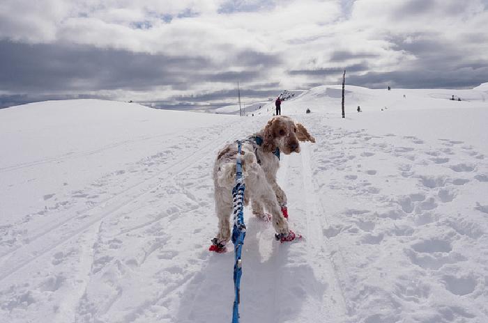 På ski med hund
